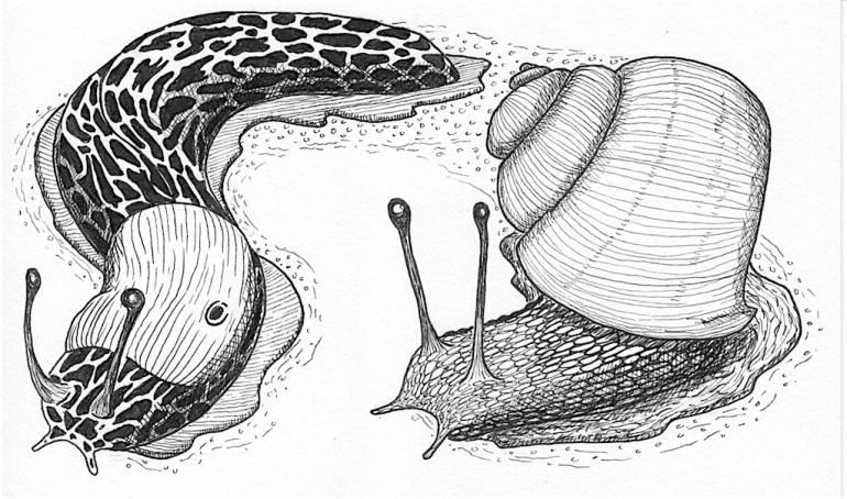 Snail and Slug Decomposer